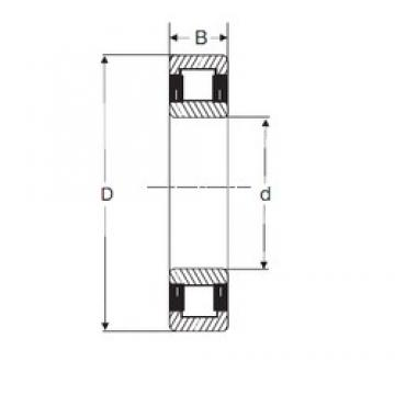 SIGMA NU 305 cylindrical roller bearings